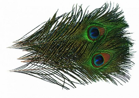 Peacock Eye Feather Natural