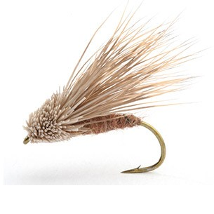Streaking Caddis 12
